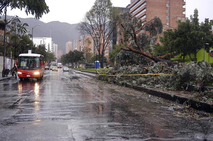 Así puede identificar un árbol que está en riesgo de caída