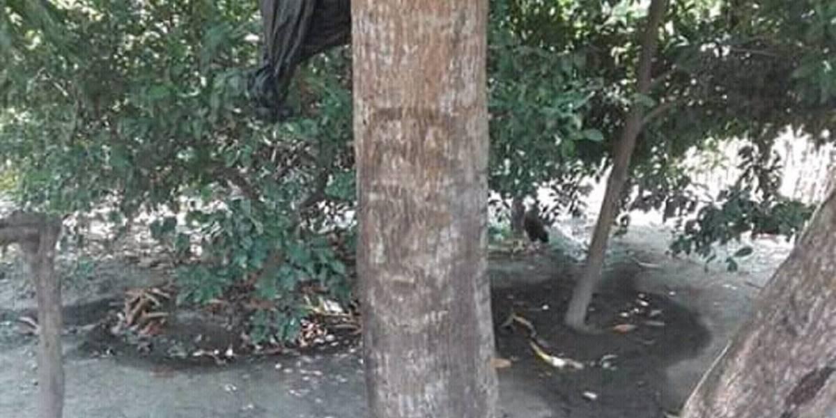 ¡Milagro en Semana Santa! Jesús se apareció en un árbol