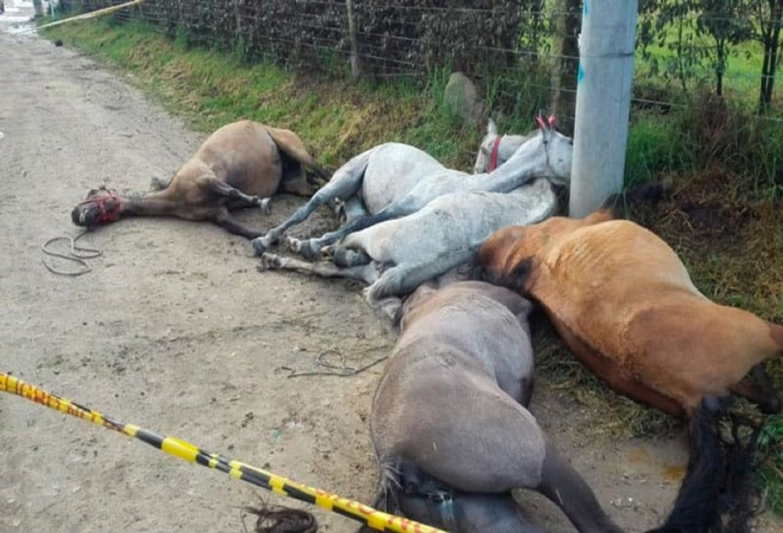Cinco caballitos murieron amarrados a poste por culpa de irresponsables jinetes