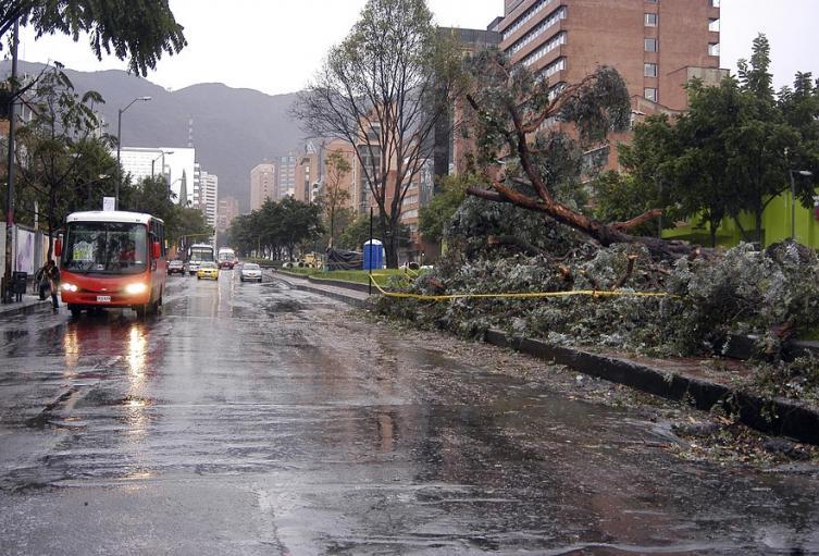 Tratamiento de zona de árboles por emergencia de lluvia en Bogotá