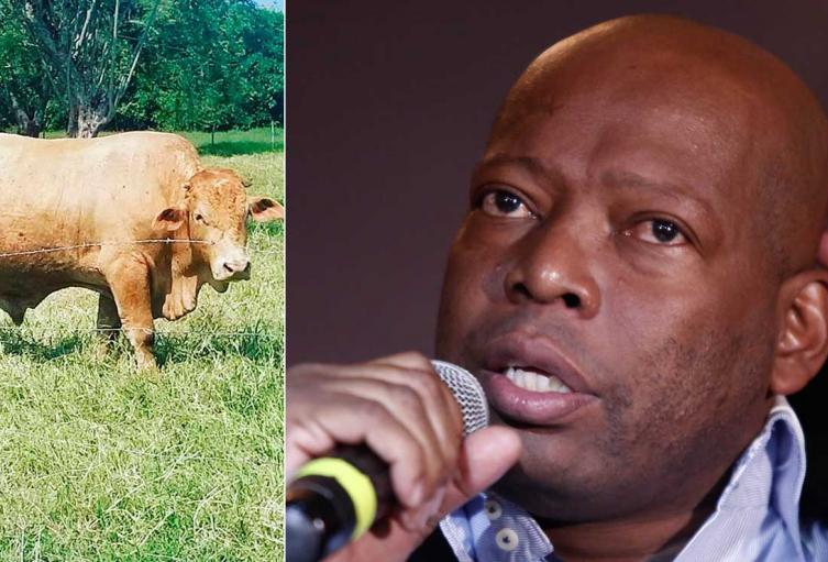 Faustino Asprilla y la denuncia que hizo a través de Twitter por el robo de su ganado