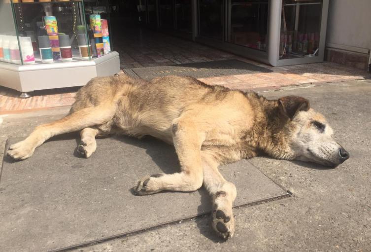 Perros callejeros en Bogotá