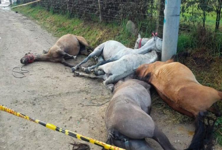 Caballos fallecidos en Cundinamarca