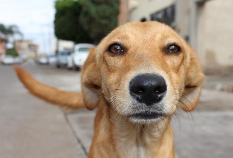 Maltrato animal, perro