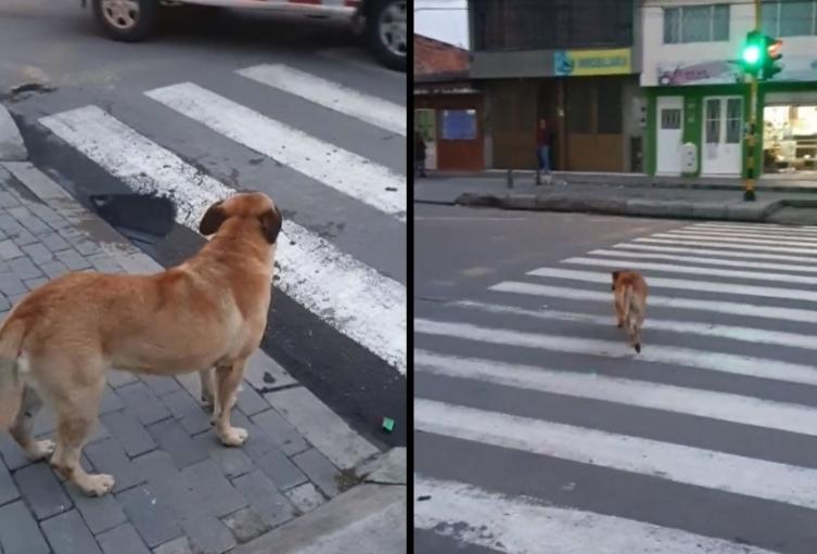 Perro, ejemplo de cultura ciudadana