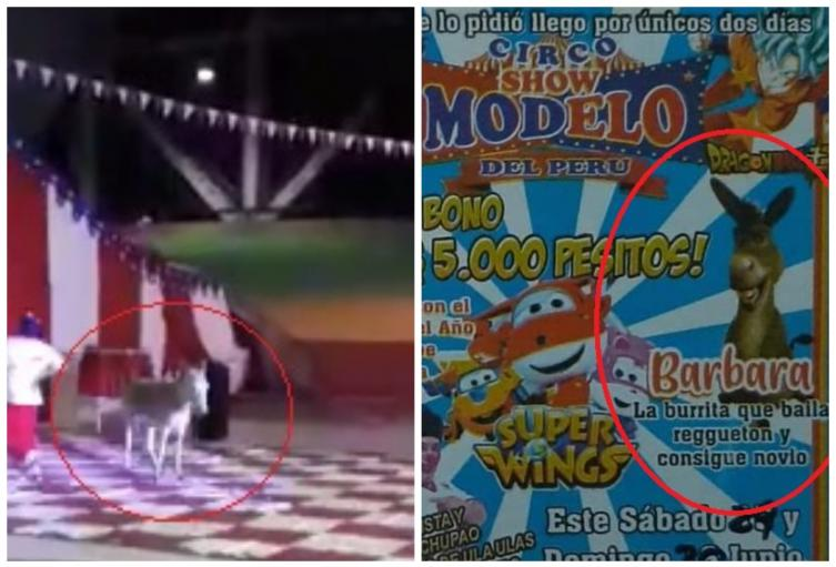 Circo Modelo del Peru