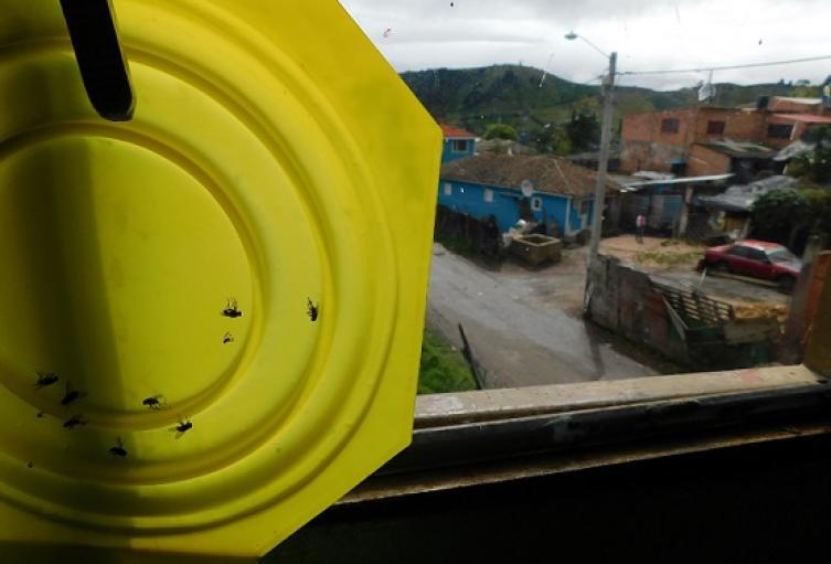 Moscas en las casas vecinas al relleno Doña Juana.