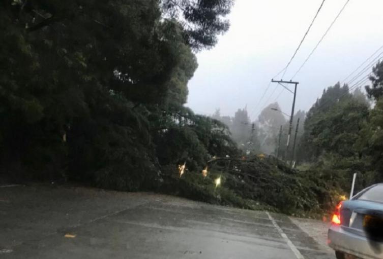 Caída de un árbol en La Calera