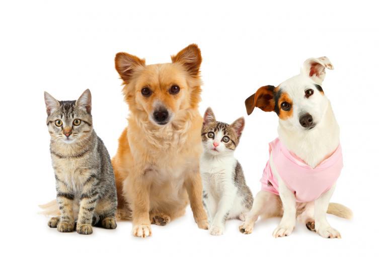 Mascostas/ Gatos y perros