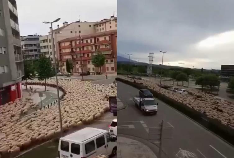 Río de ovejas invade una ciudad