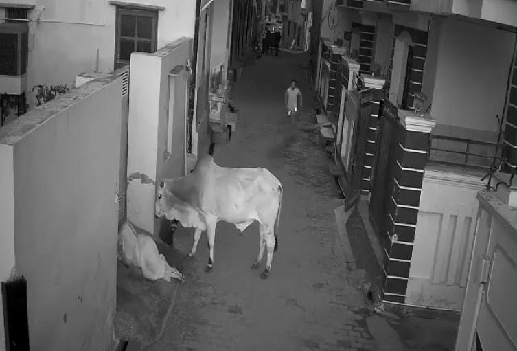 Ataque de un toro