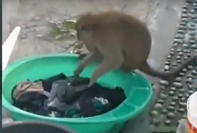 Mono lavando