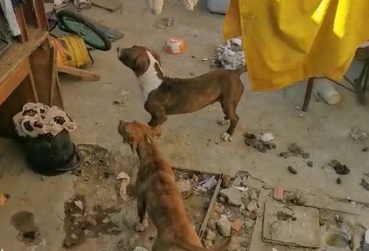 Perros atacan a niño
