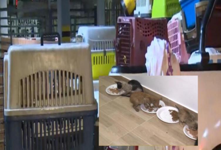 150 gatos fueron enviados a Bogotá