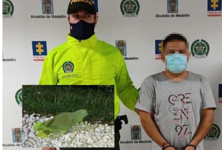"""Cabecilla de """"Los Triana"""" entrenó a dos loros para evitar la captura de la policía"""