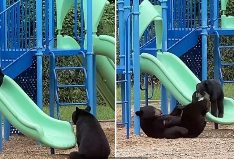 Mamá oso y su cría