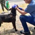 Lanzan un perro vivo desde un puente vehicular