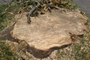 Tronco de árbol talado en Chapinero