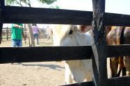 Zona de ganado en Colombia