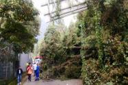 Caída de árbol en avenida Circunvalar, en Bogotá