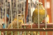 Aves incautadas en el aeropuerto El Dorado