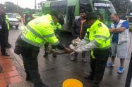 Boa constrictor recuperada en Bogotá.