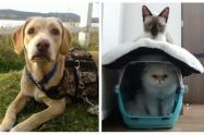 Mascotas de viaje