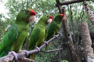 Rescate de aves silvestres