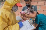 Más de 1.000 perros y gatos han sido salvados en Bogotá