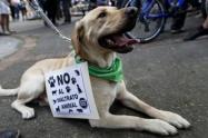 Con los 47 alcaldes del departamento se buscará fortalecer los mecanismos de protección animal