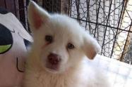 Simón, perrito abandonado