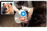 Oso atacó a perro