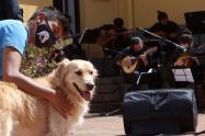 Realizan concierto en Bogotá por los derechos de los animales