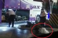Denuncian que dos perros fueron transportados en bodega de bus