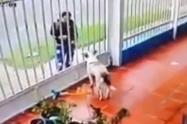 Le lanzan ácido a perro