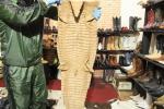 Artículos hechos con animales silvestres fueron incautados en Bogotá