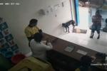 Perro callejero entra a veterinaria a pedir ayuda