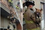 Rescatan a perros