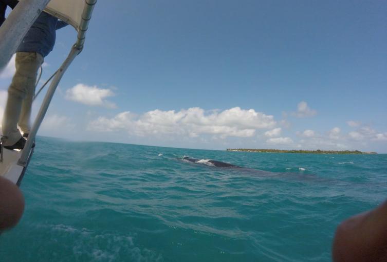 ballena en isla