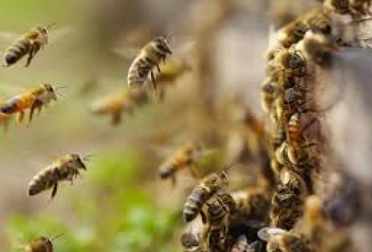 """"""" le picaron solo cuatro abejas"""":   vecinos de la victima"""