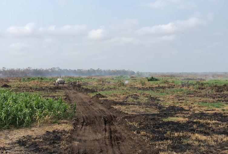 Más de 80 hectáreas de vegetación arrasadas.