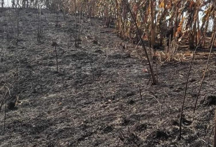 Cultivos de plátano, limón y mango sueron quemados