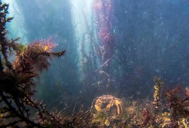 Vida marina en Venecia, Italia
