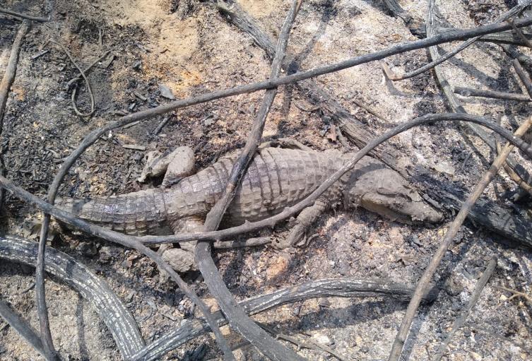 Incendio en zona de reserva en el Caribe colombiano.