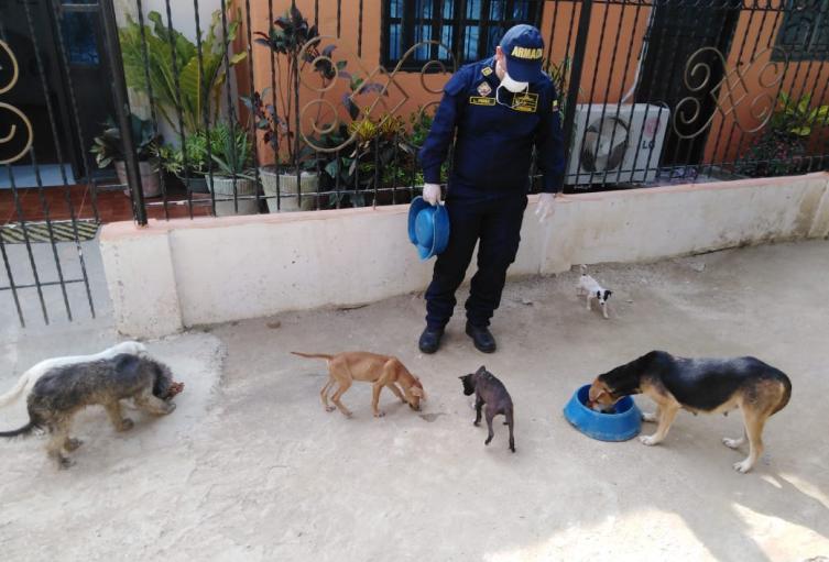 Armada de Colombia realizò campaña de alimentaciòn dirigido a perros en condiciòn de  calle en el municipio de Coveñas.