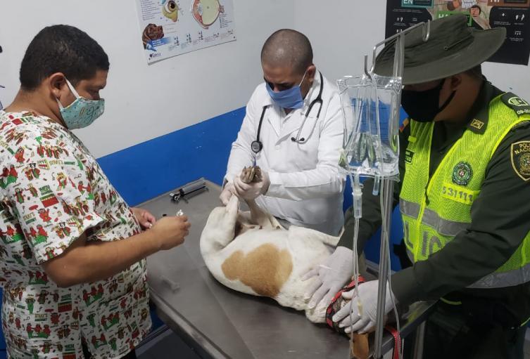Autoridades rescatan a la canina.
