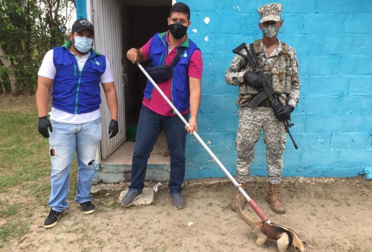 Oso Hormiguero es rescatado por parte de Armada Nacional y Carsucre
