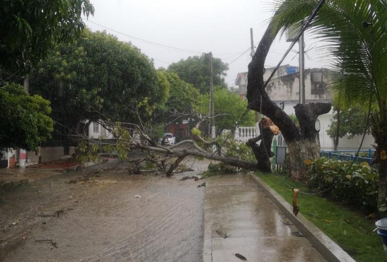 Las fuertes brisas derribaron árboles y techos.