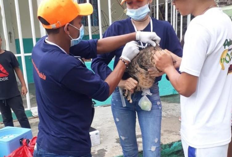 Vacunación, Felinos, Caninos, Santa Marta, Magdalena, Distrito