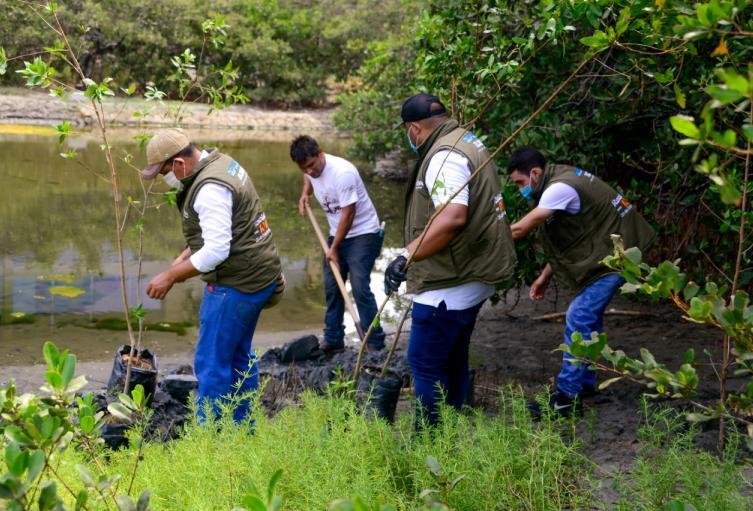 En el 2020 se sembraron 10 mil arboles en Santa Marta